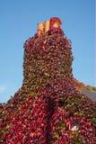 Hiedra en la chimenea Imagen de archivo