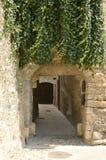 Hiedra en la puerta medieval del arco imagen de archivo libre de regalías