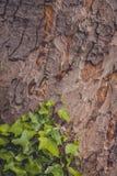 Hiedra en un tronco de árbol Imagen de archivo libre de regalías