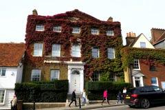 Hiedra, maravilla roja del otoño que sube imágenes de archivo libres de regalías