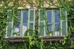 Hiedra revestida en las paredes y las ventanas Foto de archivo libre de regalías