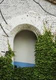 Hiedra verde en un edificio viejo con la abertura del arco Fotografía de archivo
