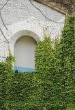 Hiedra verde en un edificio viejo con la abertura del arco Foto de archivo