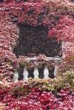 Hiedra y balcón Foto de archivo libre de regalías