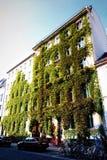 Hiedra y casa, Berlín, Alemania Imagenes de archivo