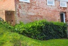 Hiedra y pared de ladrillo foto de archivo