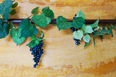 Hiedra y vid de uvas en la pared Fotos de archivo