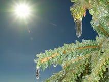 Hiele el árbol de pino en el cielo soleado de la mañana del invierno Foto de archivo