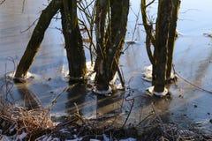 Hiele la formación en los árboles en el lago Imágenes de archivo libres de regalías