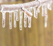 Hiele la rama de árbol revestida después de una tormenta de hielo. Fotos de archivo libres de regalías