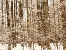 Hiele las ramas de árbol cubiertas en árboles altos en bosque nevoso Imagenes de archivo