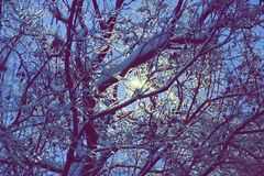 Hiele los árboles en la noche la luz de una linterna a través de las ramas o Fotografía de archivo