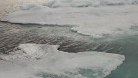 Hielo azul de la laguna en el Océano ártico almacen de video