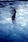 Hielo azul del invierno, río congelado Foto de archivo libre de regalías
