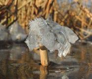 Hielo, cristales y el tallo del bastón Foto de archivo libre de regalías