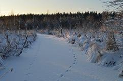 Hielo de la nieve del río congelado invierno del bosque en el amanecer en las pistas animales Fotografía de archivo libre de regalías