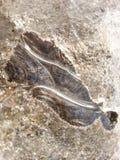 Hielo de los substratos, detalles macros Imagen de archivo
