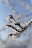 hielo del árbol de la nieve de helada fotos de archivo libres de regalías