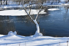 Hielo del río del fondo del árbol Foto de archivo libre de regalías