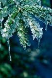 Hielo en árbol de pino Fotos de archivo