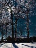 Hielo en árboles Imagen de archivo libre de regalías