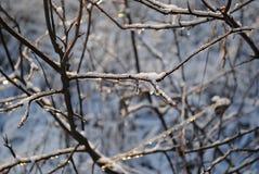 hielo en árboles Fotografía de archivo libre de regalías