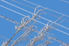 Hielo en los alambres Fotos de archivo libres de regalías