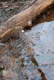 Hielo en una cala congelada Fotografía de archivo libre de regalías