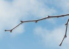 Hielo en una rama después de un aguanieve foto de archivo libre de regalías
