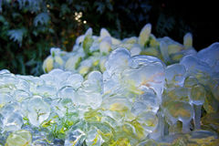 Hielo en verde Imagen de archivo libre de regalías