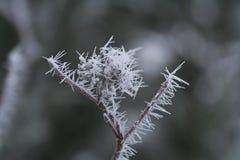 Hielo-flor Fotografía de archivo libre de regalías