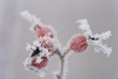 Hielo-flor Fotografía de archivo
