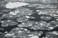 Hielo marino antártico Fotos de archivo