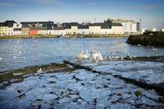 Hielo quebrado en la batería del río y de los cisnes de Corrib Imágenes de archivo libres de regalías