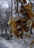 Hielo silencioso Fondo congelado de las plantas foto de archivo