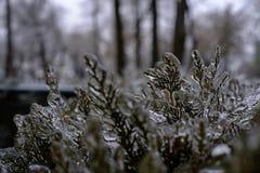 Hielo silencioso Fondo congelado de las plantas fotografía de archivo libre de regalías