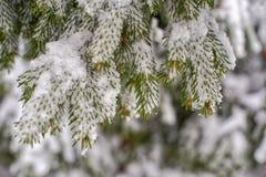 Hielo silencioso Fondo congelado de las plantas imágenes de archivo libres de regalías