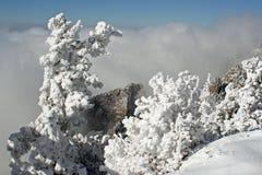 Hielo y árbol de pino nevado dos foto de archivo