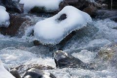 Hielo y agua Imagenes de archivo