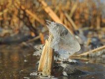 Hielo y cristales en el tronco Foto de archivo