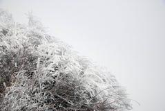 Hielo y nieve Fotos de archivo