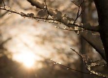 Hielo y nieve en las ramitas Imagenes de archivo