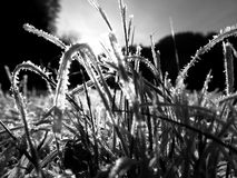 Hielo y sol Fotografía de archivo libre de regalías