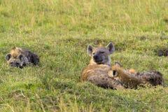 Hiena con los cachorros jovenes Fotografía de archivo