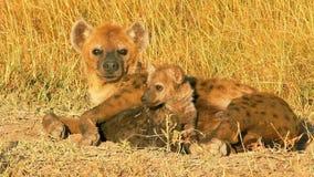Hiena con un bebé, Masai Mara metrajes