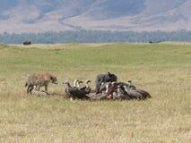 Hiena e abutres no Serengeti Fotografia de Stock