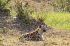 Hiena manchada que se acuesta en la hierba Imágenes de archivo libres de regalías