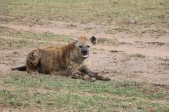 Hiena w dzikim maasai Mara Fotografia Royalty Free