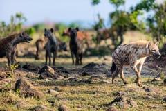 Hienas em África Imagem de Stock