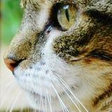 Hier Kitty Kitty Stockfotos